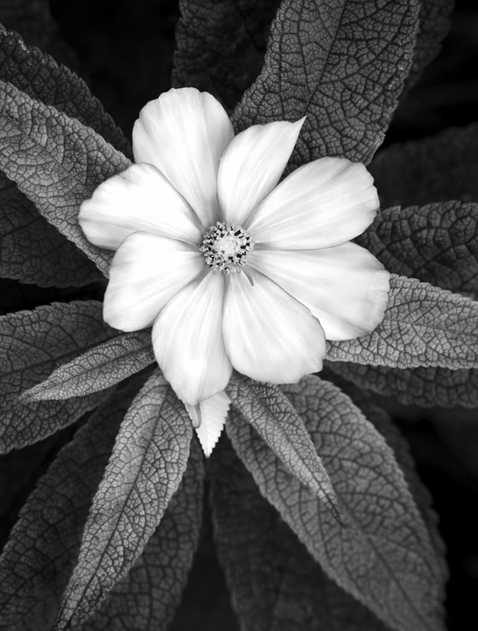 Flower Still Life, Black & White