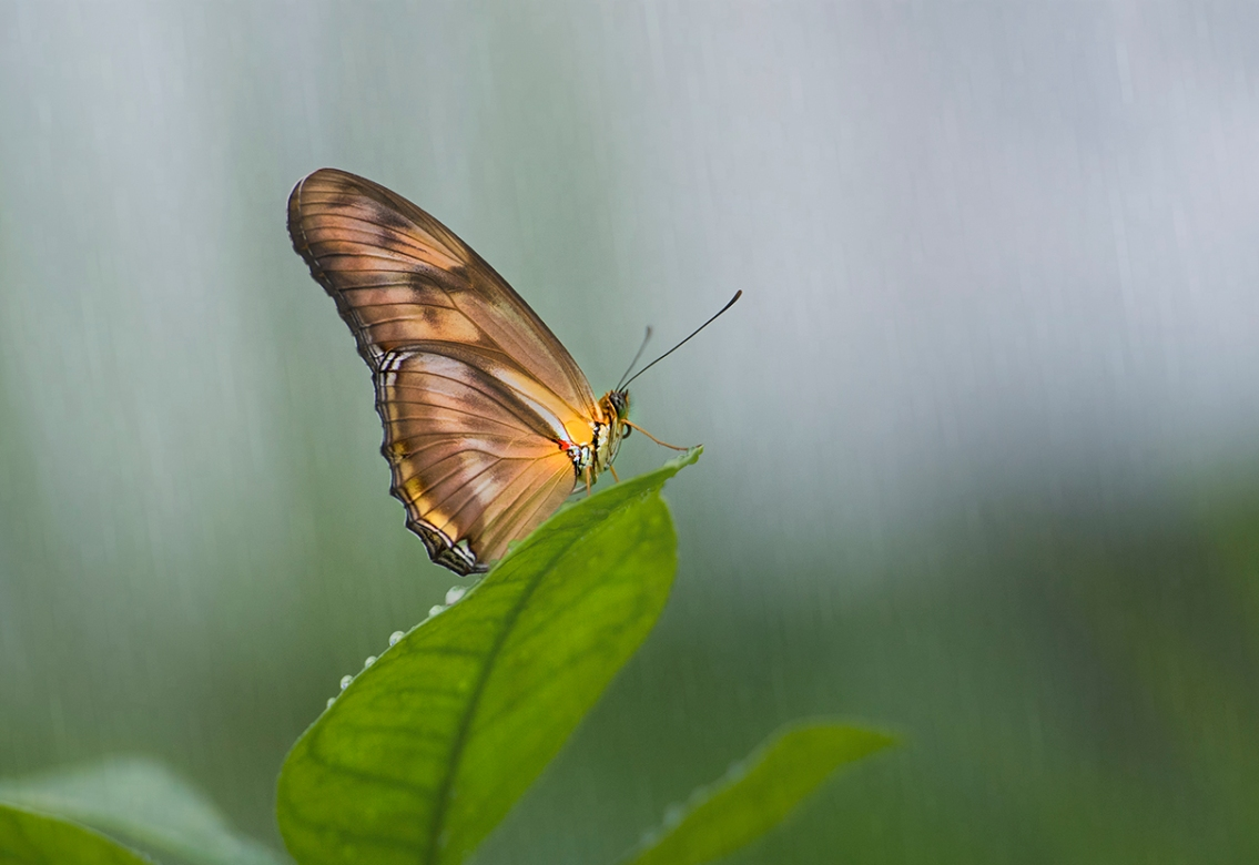 Butterfly In The Rain