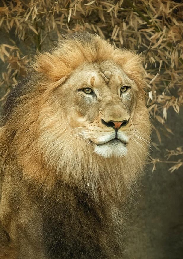 John The Lion